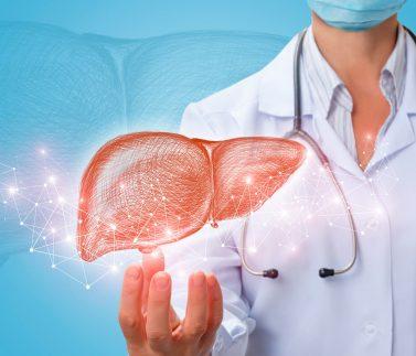 La regeneración del hígado está mediada por un conjunto de células madre que expresan telomerasa a niveles elevados